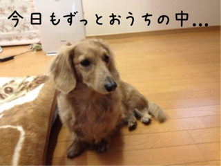 iphone/image-20120122161359.png